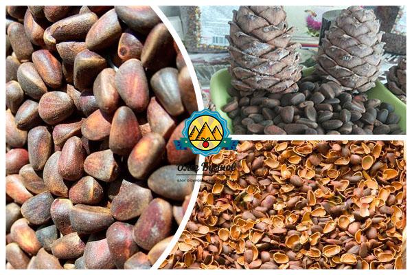 Кедровые орехи для беременных польза 729