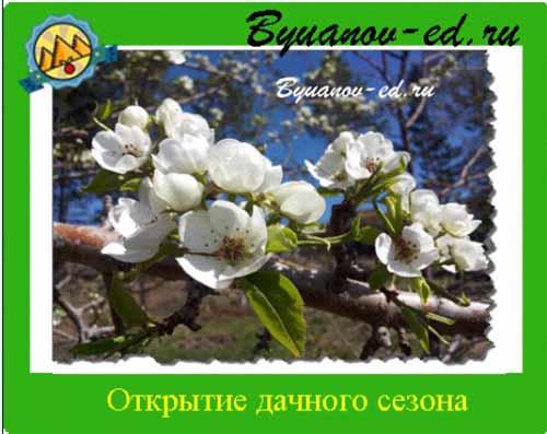 дачный сезон иркутск