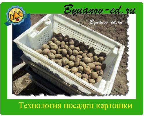 технология посадки картошки