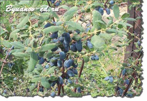 грозди