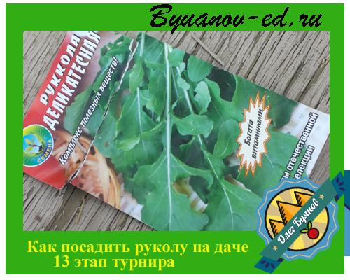 как посадить рукколу на даче