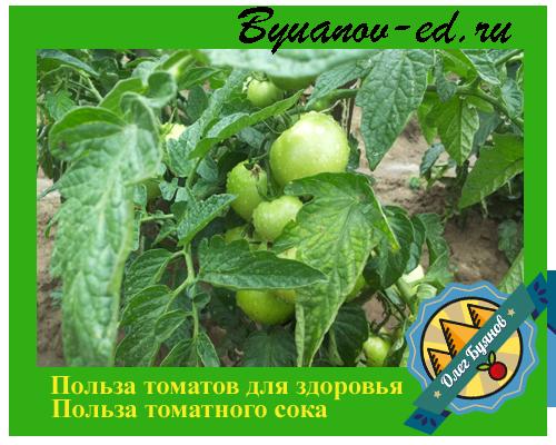 польза томатов для здоровья