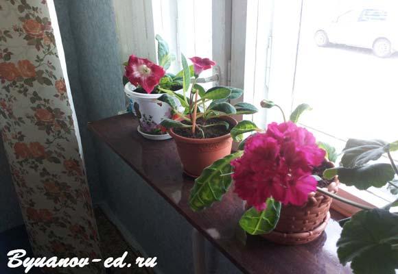 цветы на поддоконнике