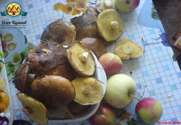 мои грибы