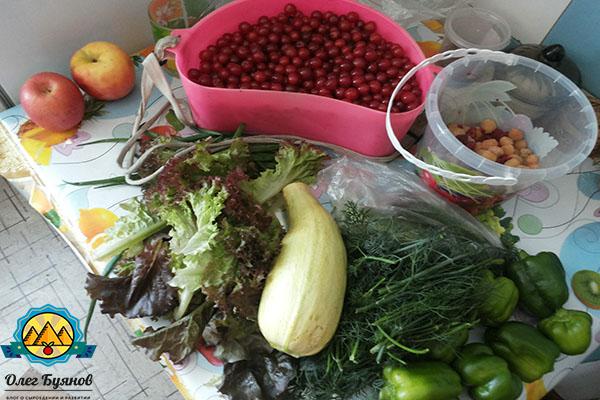 зелень и ягоды