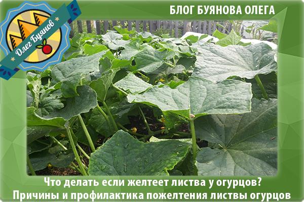 ботва овощей