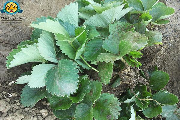 здоровые растения