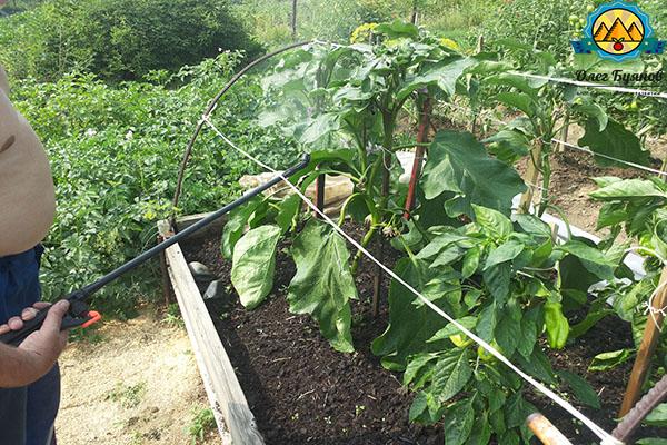 поливаю овощи