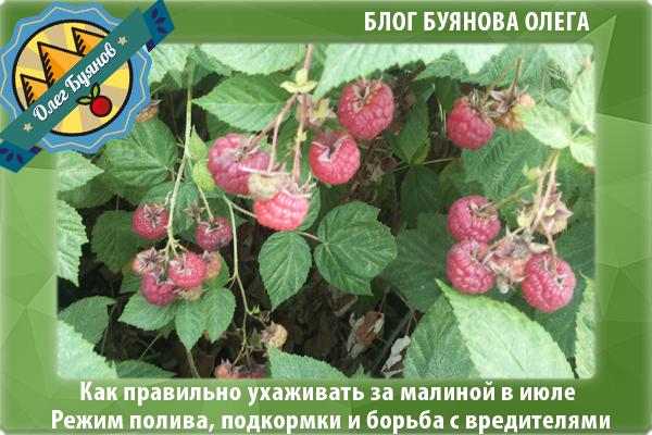урожай плодов ягоды