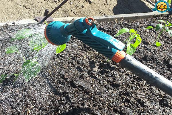 поливаю рассаду