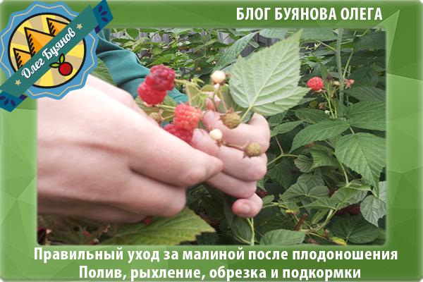 собираю плоды