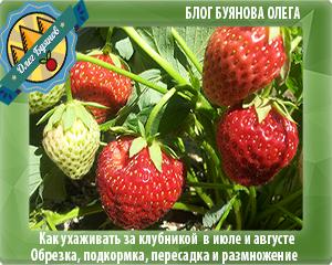 красная ягодка
