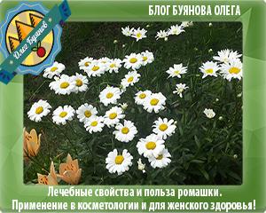 цветки на даче