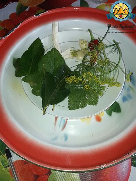 листья смородины и укроп