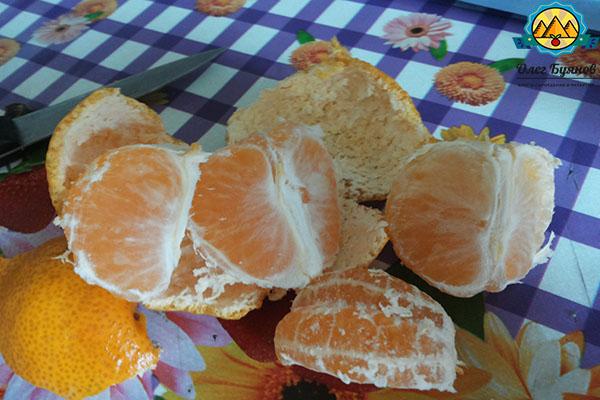 дольки фрукта