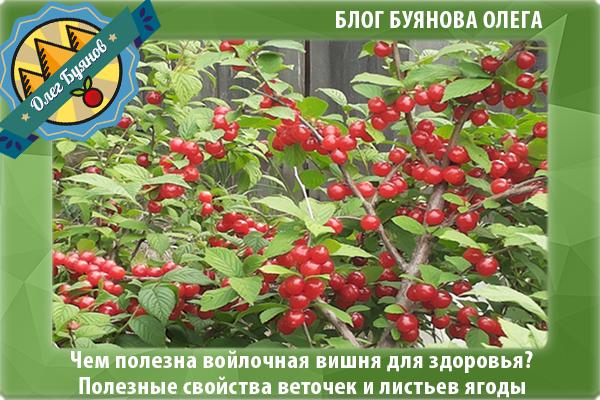 красные плоды
