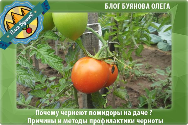 урожай красных плодов