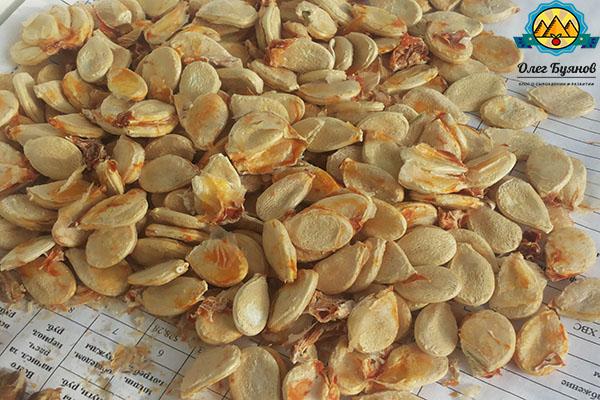 очищенные семена тыквы с чесноком от паразитов