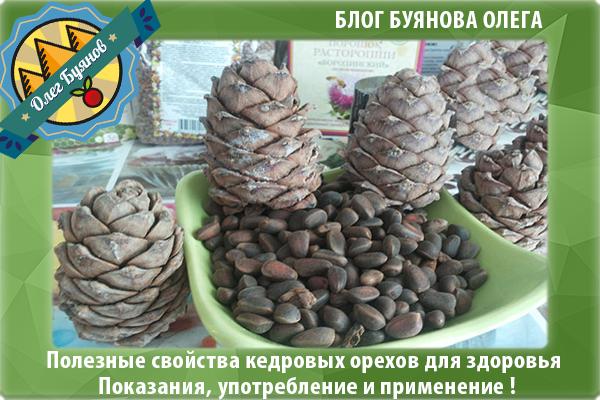 орешки и шишки кедра