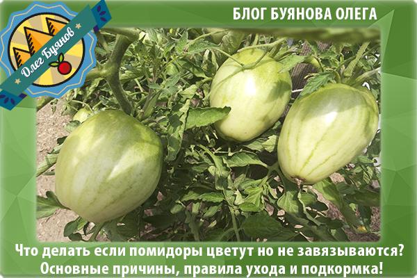 Плохо цветут помидоры