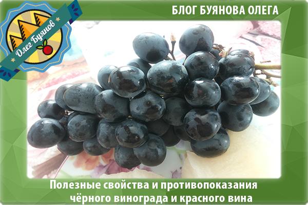 красивый чёрный виноград