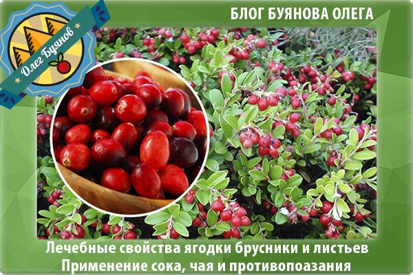 полезные плоды и листья ягоды