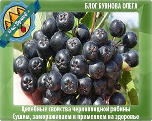 рябина с чёрными ягодами