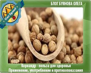 кинза семена