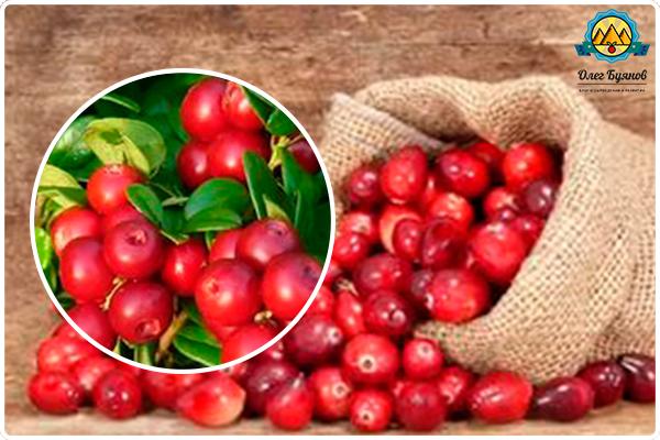 мешочек с плодами лечебной ягоды