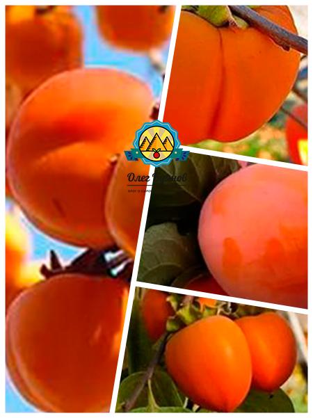 фрукт сладкий