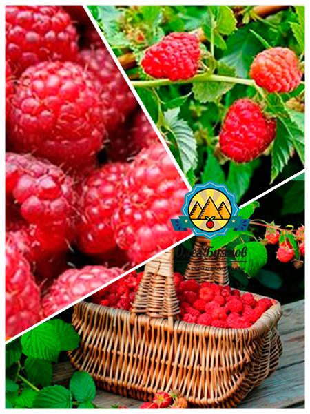 лукошко с лечебной ягодой