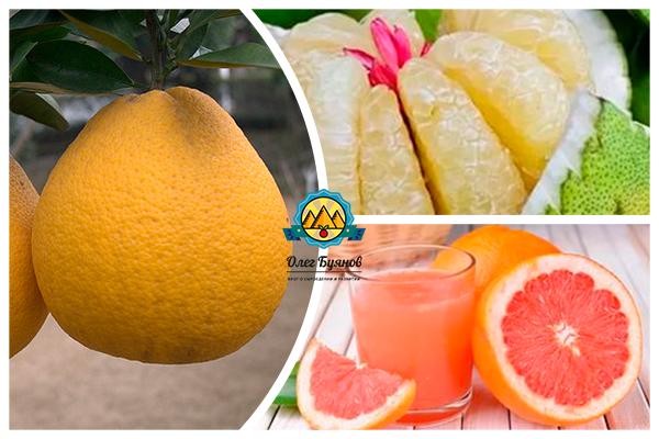 сок и ломтики фрукта