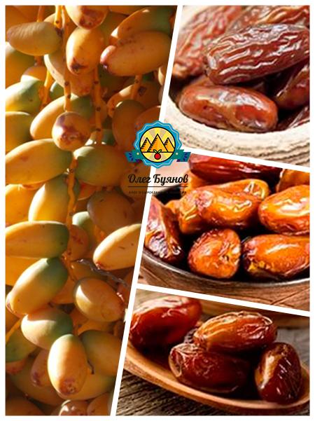 финиковые плоды