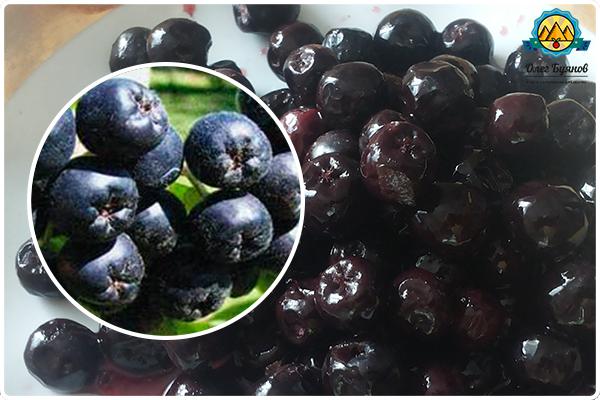 ягодки черноплодной рябинки