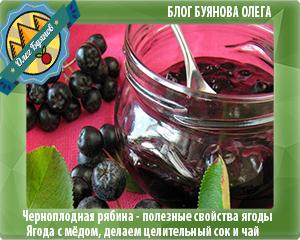 ягоды черноплодки