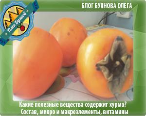 плод хурма