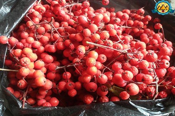 сушёные плоды красной рябины
