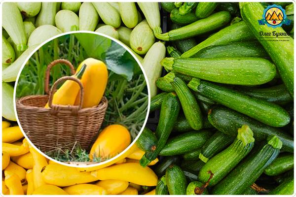 разные красивые плоды цукини