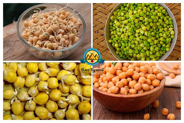 зелёные и жёлтые бобы нут