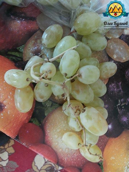зелёный виноград