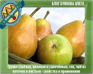 зелёные плоды груш