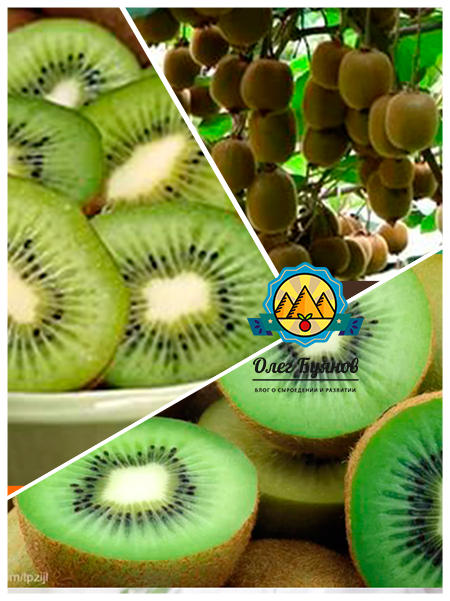 разрезанные дольки плода