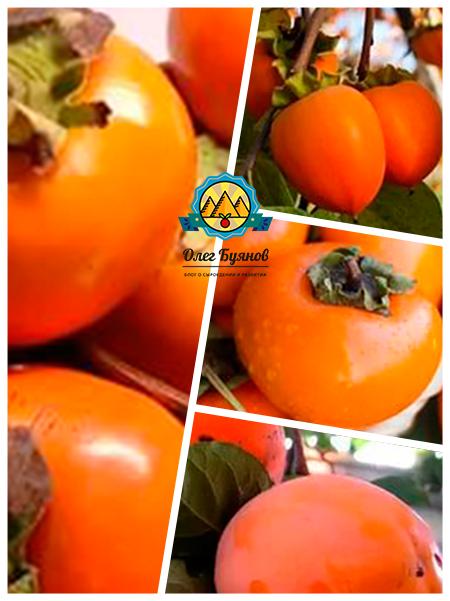 ягода и фрукт хурма