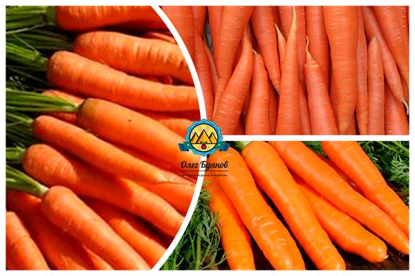 овощ морковка