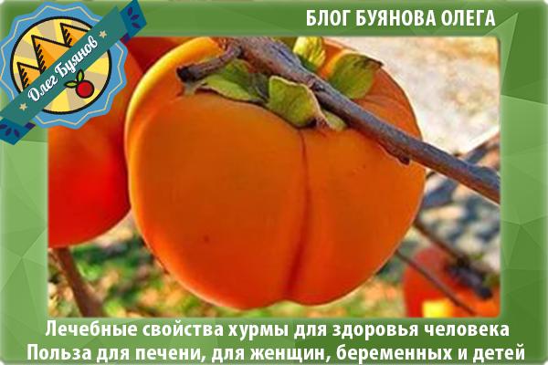 оранжевая ягода хурма