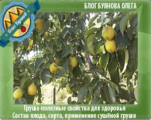 зелёные плоды фрукта
