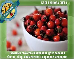 плоды красного шиповника