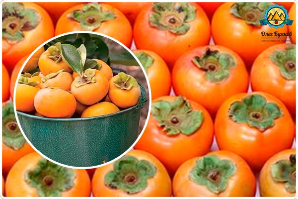 плоды оранжевой хурмы