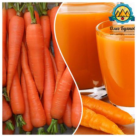 красивая оранжевая морковка