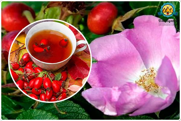 цветки и ягоды растения